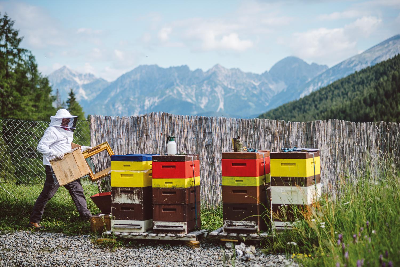 <p>Reinhard Hetzenauer bei seinen Bienenstöcken in der Axamer Lizum kurz vor der Entnahme der Honigwaben. Im Hintergrund das Karwendel.</p>