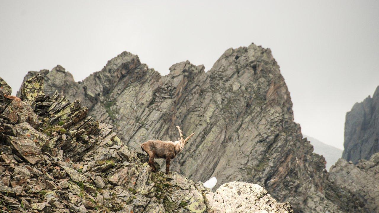 , © Tirol Werbung /Jannis Braun