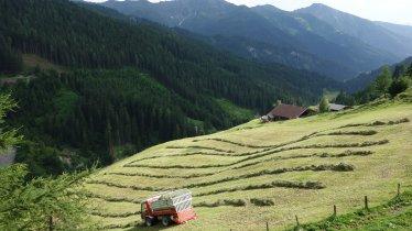 Navistal, © Tirol Werbung/Nicole Pfeifer
