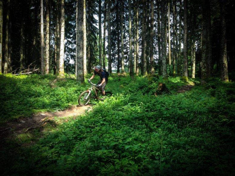 Flowige Waldstücke am Fleckalm Trail. , © Steffen Arora