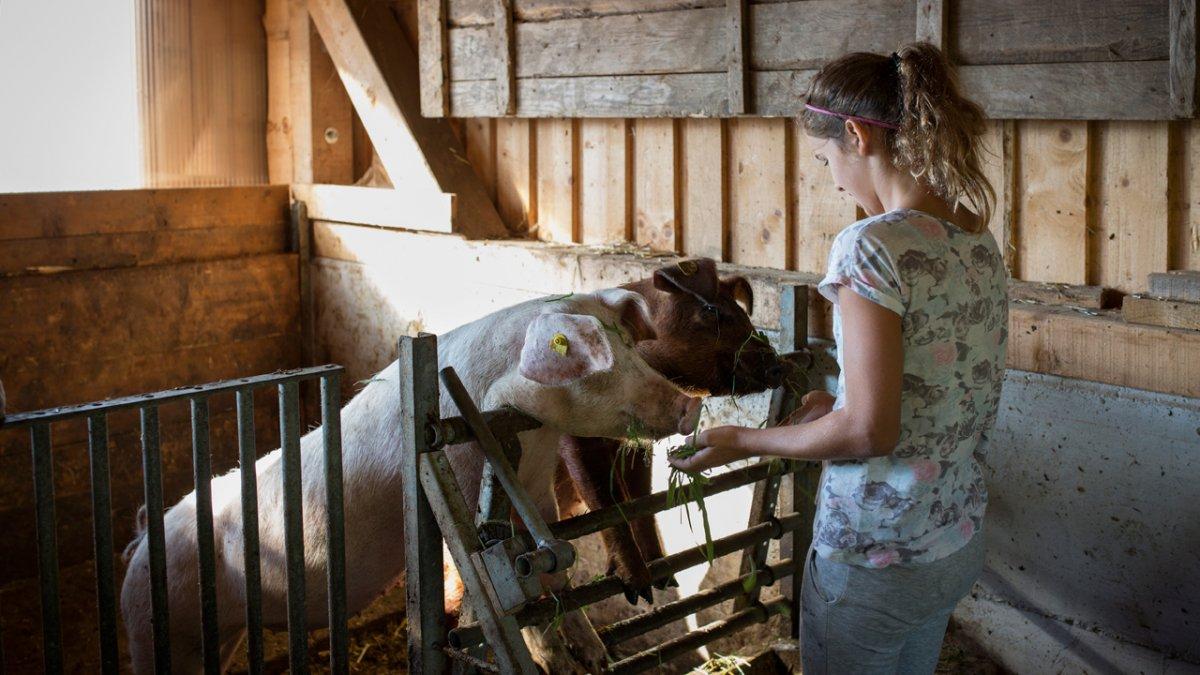 Besonders zutraulich sind die Schweine, die sich gern mit frischem Gras füttern lassen., © Tirol Werbung/Lisa Hörterer