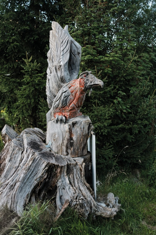 Rote Brust: Von Natur aus ist die Brust des Bartgeiers eigentlich weiß – weil die Vögel aber auf Felsen mit Eisenoxid nisten, verfärbt sich das Gefieder.