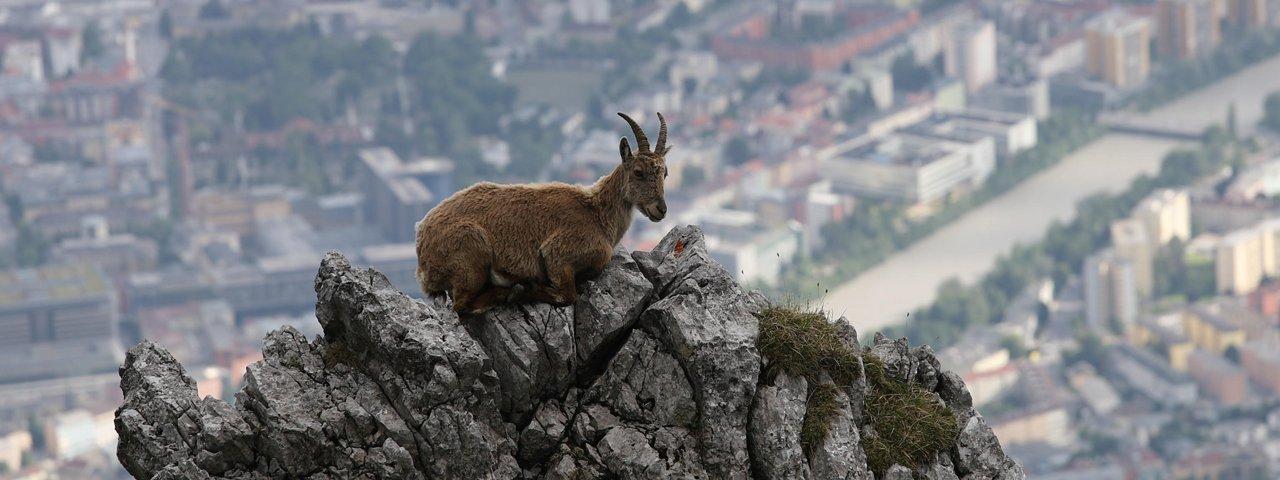 Die Natur steht beim International Nature Festival Innsbruck im Mittelpunkt, © Alps of Contrast