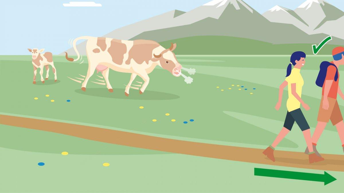 Verhaltenstipp Nr. 8, © Landwirtschaftskammer Tirol