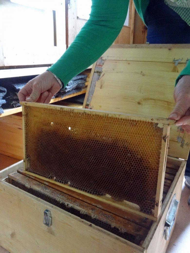 Evi mit Bienenwaben