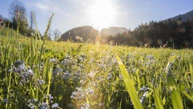 Landschaft Pinzgerhof, © Fam. Kammerlander