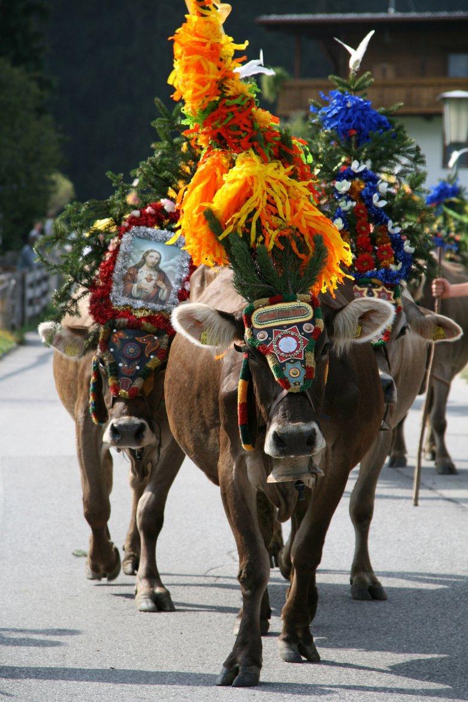 Zum Dank für die unfallfreie Zeit am Berg werden die Tiere bei der Heimkehr prächtig geschmückt mit Blumen, Glocken und Schellriemen.
