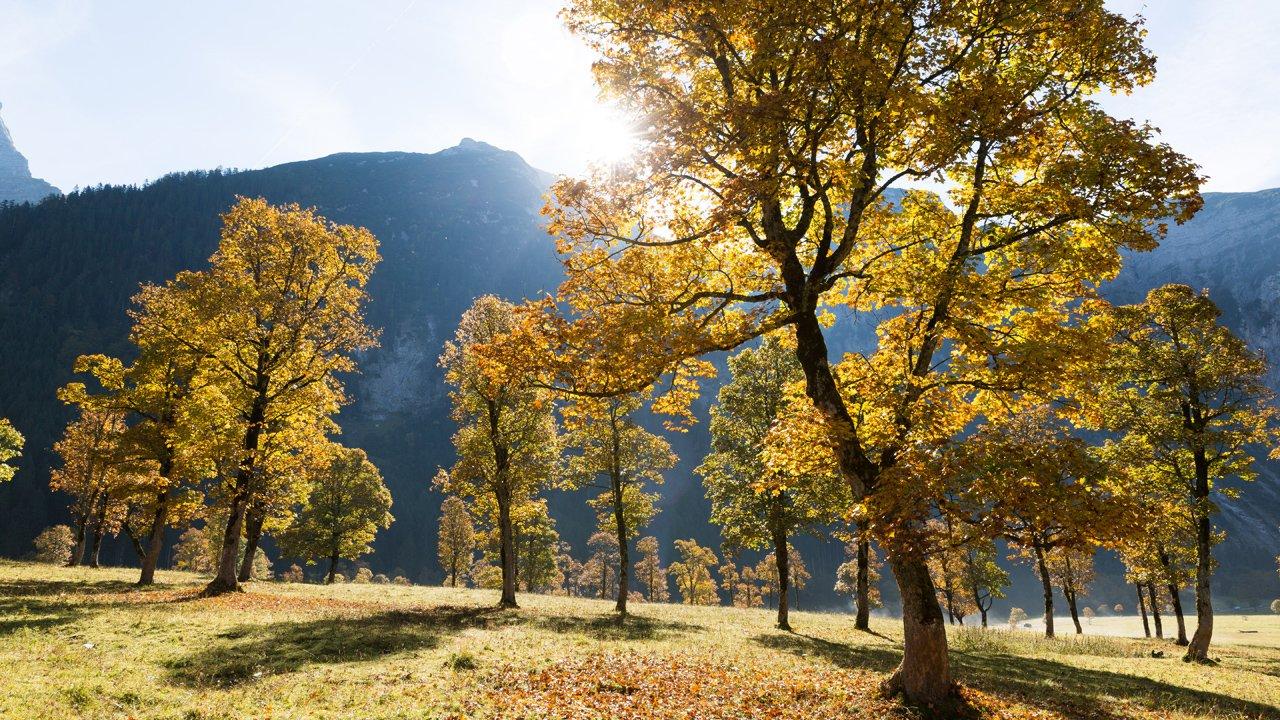 Herbst am großen Ahornboden, © Tirol Werbung/W9 studios