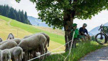 Bike Trail Tirol Etappe 14: Westendorf - Alpbach, © Tirol Werbung / Neusser Peter