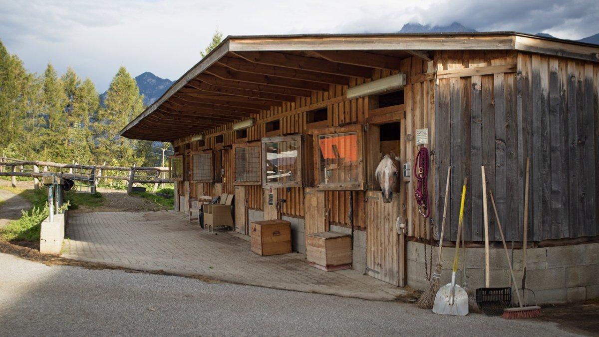 Acht Pferde sind Teil der Tier-Familie auf dem Pechhof., © Tirol Werbung/Lisa Hörterer