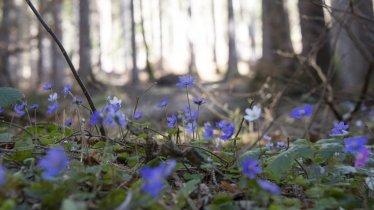 Katinmähder, © Tirol Werbung / Angela Fuchs