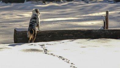 Haustiere auf Anfrage, © Birgit Standke