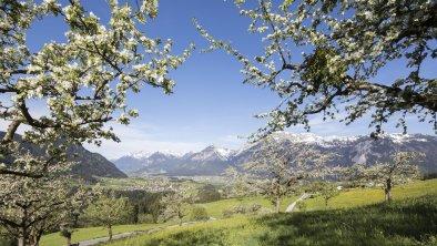 Sommer Pinzgerhof (4), © Fam. Kammerlander
