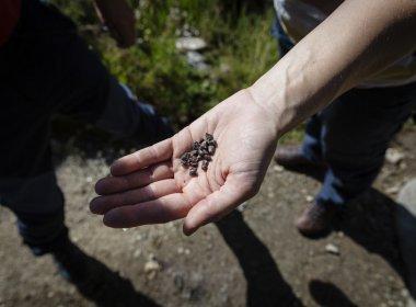 Kleine runde Granatkristalle findet man häufig in den Zillertaler Alpen.