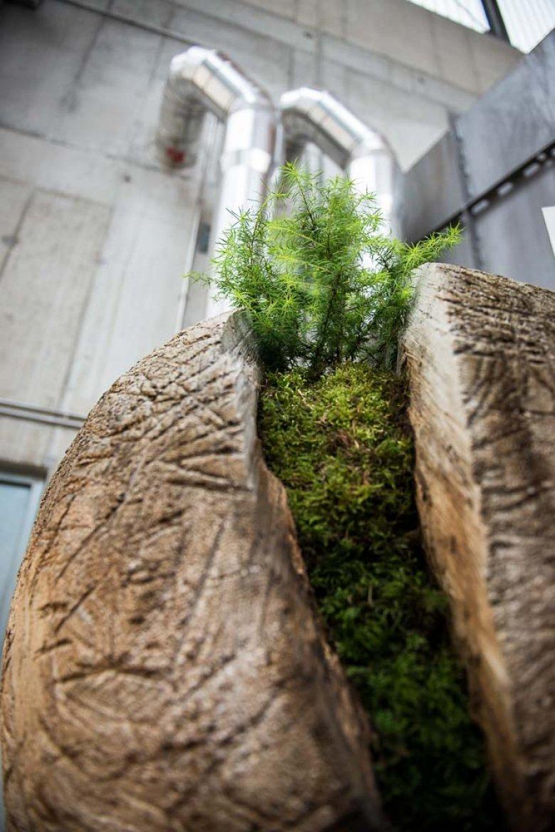 Im Inneren des Kraftwerks steht ein unauffälliges Kunstobjekt, das die Idee der Nachhaltigkeit auf den Punkt bringt: Eine gespaltene Holzkugel, aus der ein Jungbaum wächst. Vielleicht ist es auch eine sanfte Kampfansage gegen Atommeiler, Braunkohlekraftwerk-Ungetüme und Megastaudämme. (Foto: Fabrizia Costa – www.costaphotography.co.uk)