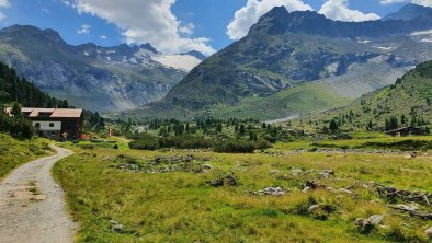 Alpenrose im Zemgrund