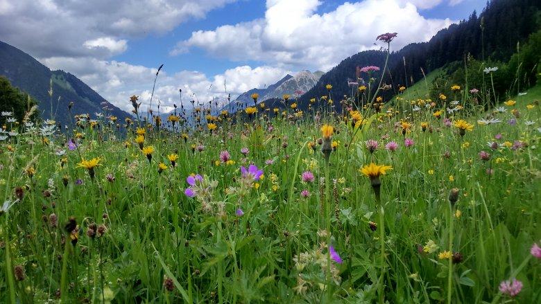 Kräuterwiese im Lechtal. Foto: Daniela Pfefferkorn