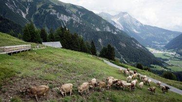 Hinauf zur Nessleralm in Pettneu am Arlberg, © Tirol Werbung / Lisa Hörterer