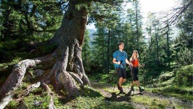 Wanderung im Wald, © Olympiaregion Seefeld