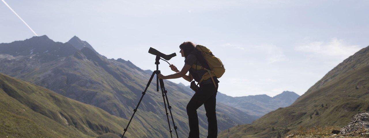 Nature Watch im Nationalpark Hohe Tauern, © Tirol Werbung / Heinzlmeier Bert