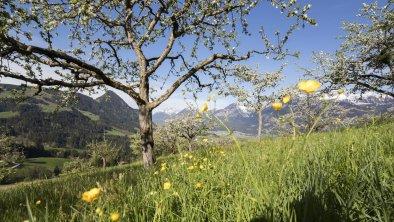 Sommer Pinzgerhof (3), © Fam. Kammerlander