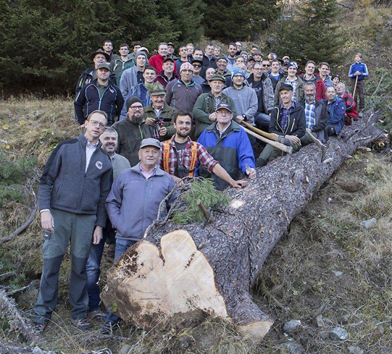 60 Männer holten im Oktober die Zirbe für das Blochziehen 2018 aus dem Wald.  Fotos: Fisser Blochziehen - Andreas Kirschner