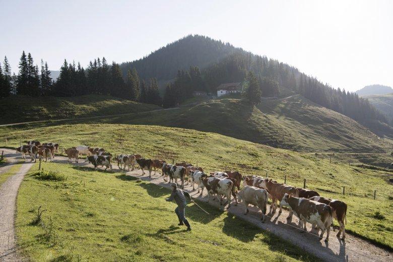 38 glückliche Kühe grasen von Mai bis Oktober auf der Burgeralm.