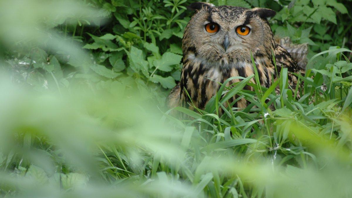Wildpark Assling, © Erlebniswelt/Wildpark Assling