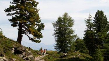 Zirbenweg bei Innsbruck, © Tirol Werbung/Markus Jenewein