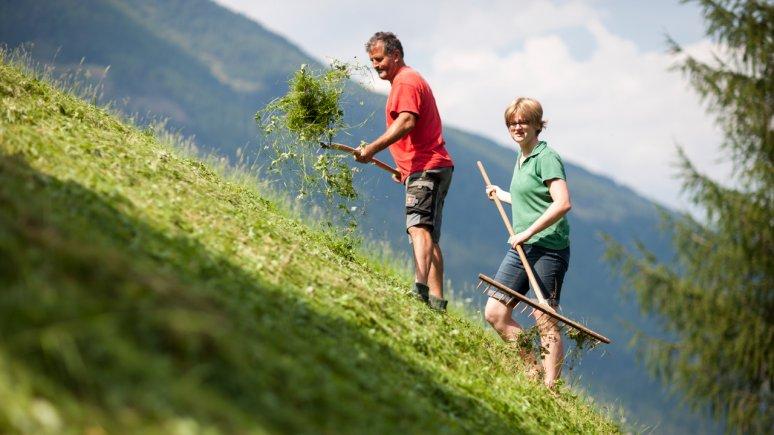 Freiwilligenarbeit auf Bergbauernhöfen, © Martin Lugger