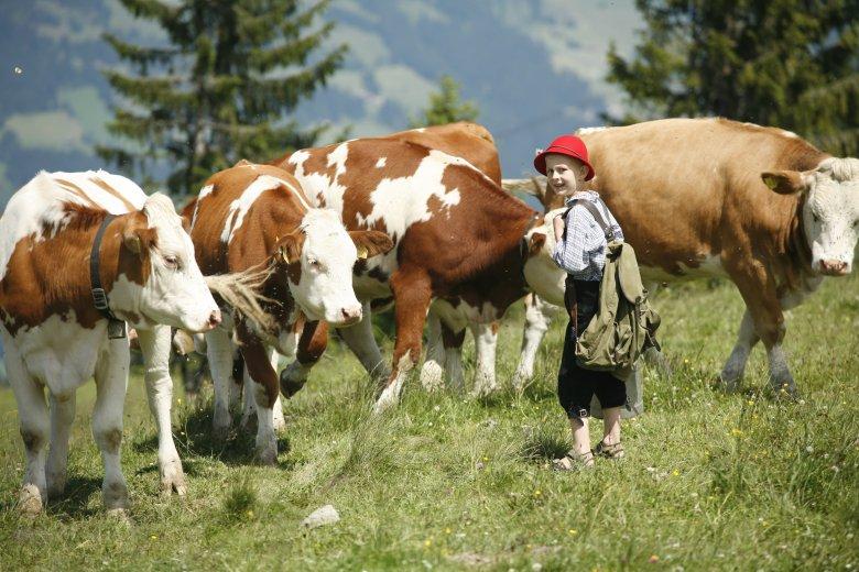 """Weil Sohn Martin (damals sechs Jahre alt) ein großer Fan der damaligen österreichischen Skirennläuferin Marlies Schild war, taufte Familie Fleckl eine ihrer Milchkühe """"Schildi""""."""