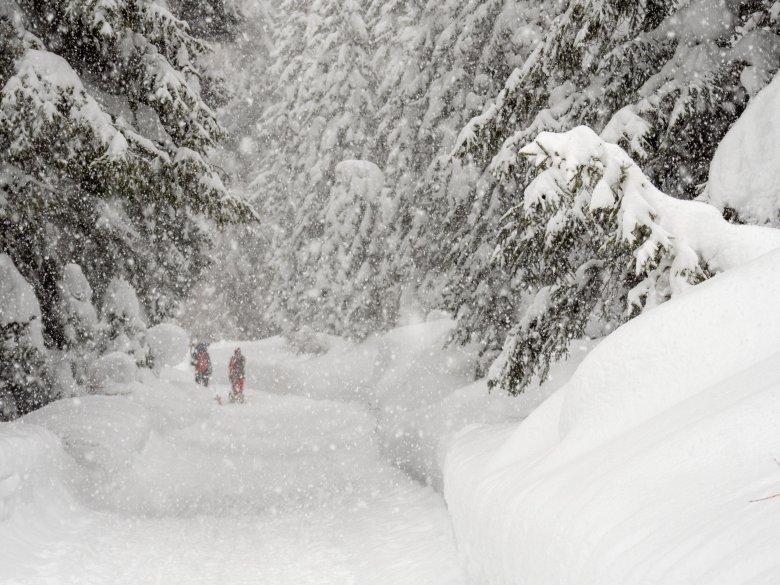 Die Bäum ein diesem Bild haben einiges zu Tragen, denn Schnee ist schwer.