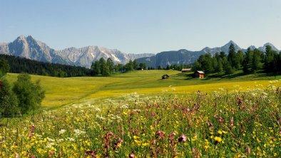 Blumenwiese in Neuleutasch, © Olympiaregion Seefeld, Heinz Holzknecht