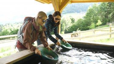 Goldwaschen im Goldschaubergwerk Hainzenberg