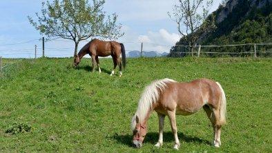 Bauernhof Hörfinghof Kufstein - Pferde auf Wiese