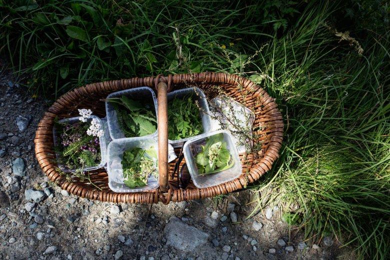 kräuter-sammeln-statt-Hamsterkauf