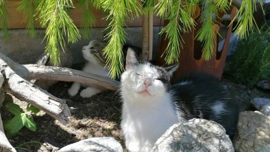 Katze Teddy genießt die Sonne