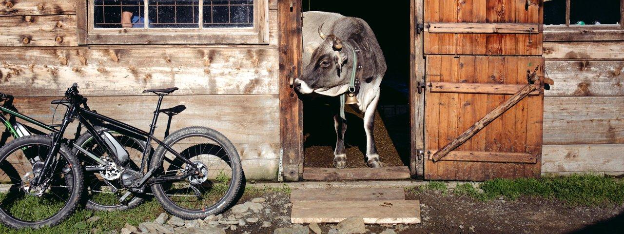 E-Mountainbiken in Tirol, © Tirol Werbung / Manfred Jarisch