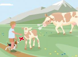 Verhaltenstipp Nr. 3, © Landwirtschaftskammer Tirol