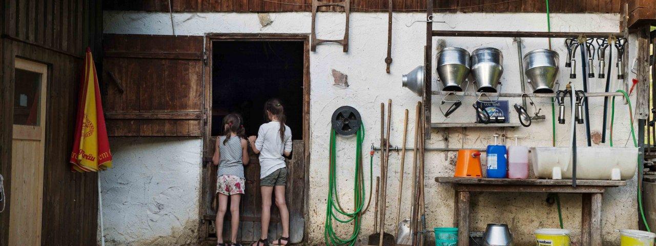 Interessante Einblicke in das Leben am Bauernhof, © Tirol Werbung/Frank Bauer