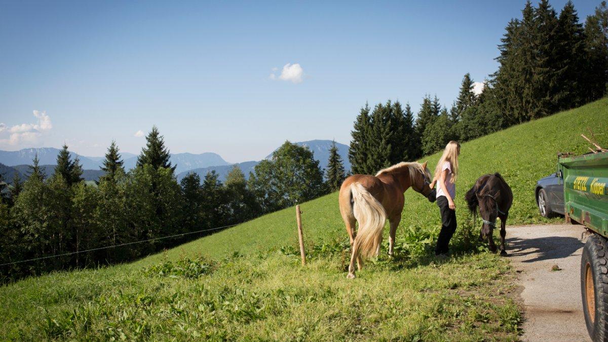 Der Siedlerhof ist das letzte Anwesen am Glantersberg und grenzt an Weiden und Wälder., © Tirol Werbung/Lisa Hörterer