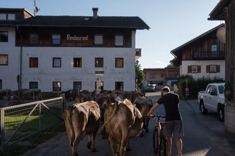 7.53 UHR Auf dem Weg zur Weide durchqueren Kühe das Dorf Forchach. Zeit wird's!