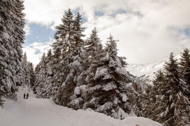 In zahlreichen Serpetinen führt diese schneesichere Rodelbahn über die Waldgrenze hinaus auf die Juifenalm.
