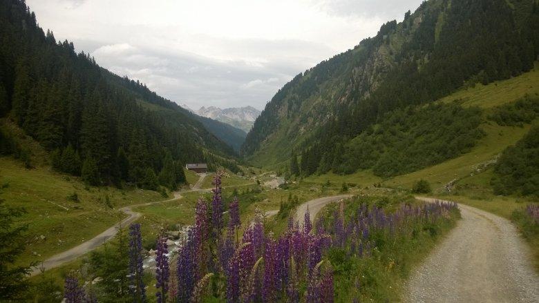 Verwalltal, hier fliegen Niggis Bienen im Sommer (Foto: Heidi Nigg)