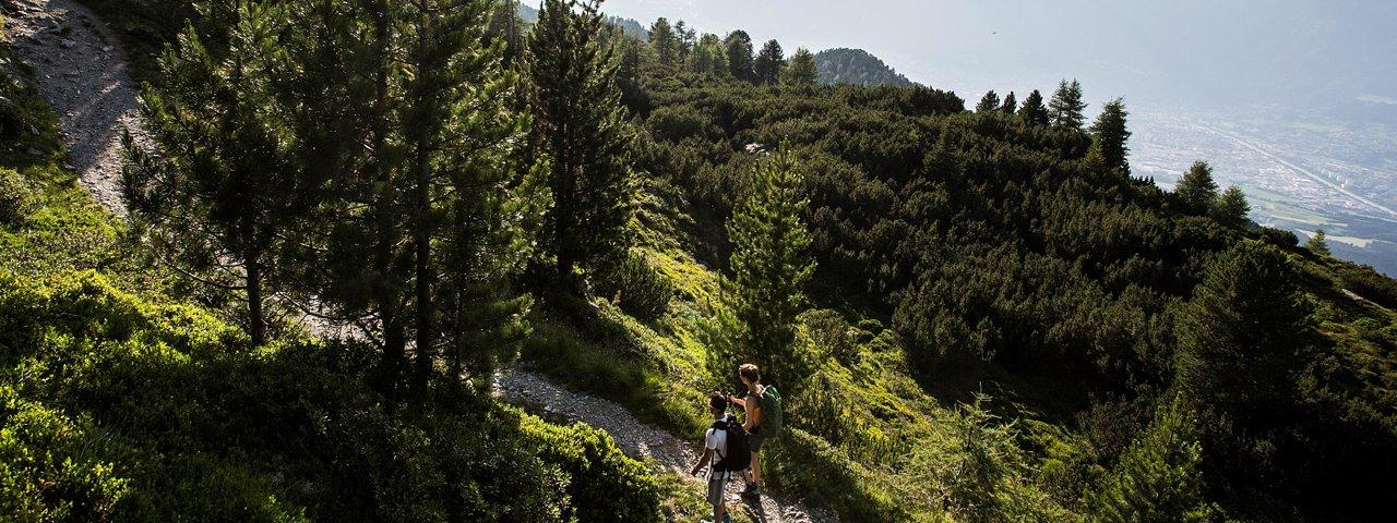 Zirbenweg vom Patscherkofel zum Glungezer, © Region Hall-Wattens/Daniel Zangerl