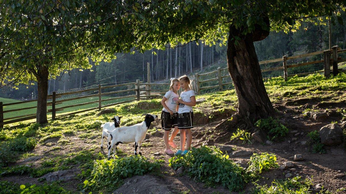 Die Zwergziegen mögen Kinder und hoffen immer auf ein kleines Leckerlie., © Tirol Werbung/Lisa Hörterer