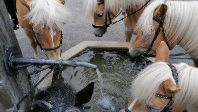 Reitferien Reitunterricht Haflinger Pferde Ferienw