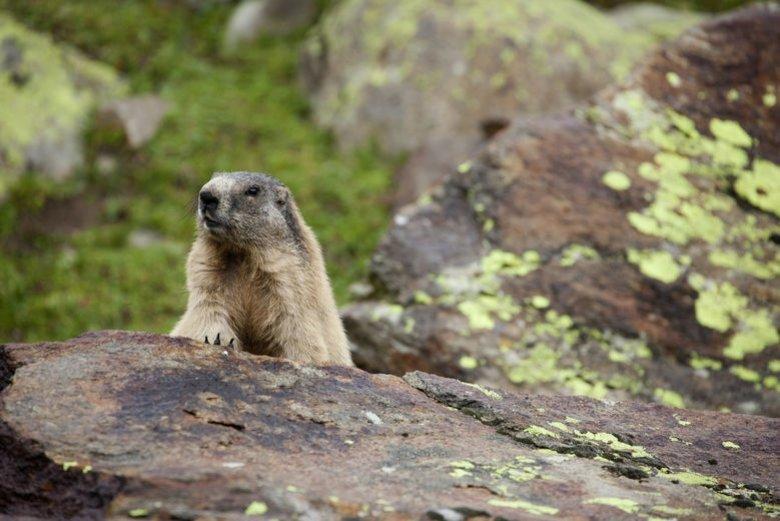 Eine faszinierende alpine Urlandschaft, viel weiter, als das Auge reicht: der Nationalpark Hohe Tauern.