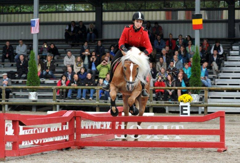 Die über 700 Haflinger Pferde kommen aus 18 Nationen (Foto: Fohlenhof Ebbs)