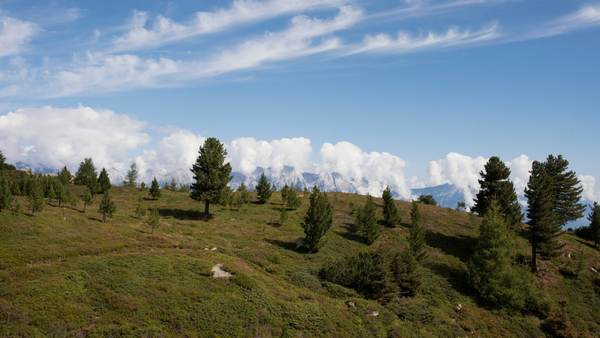 Herrliches Panorama entlang des Zirbenwegs, © Tirol Werbung/Verena Kathrein
